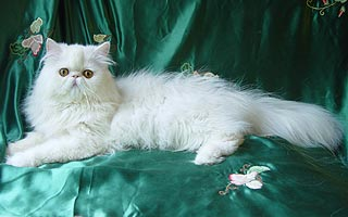 Персидський (перс)